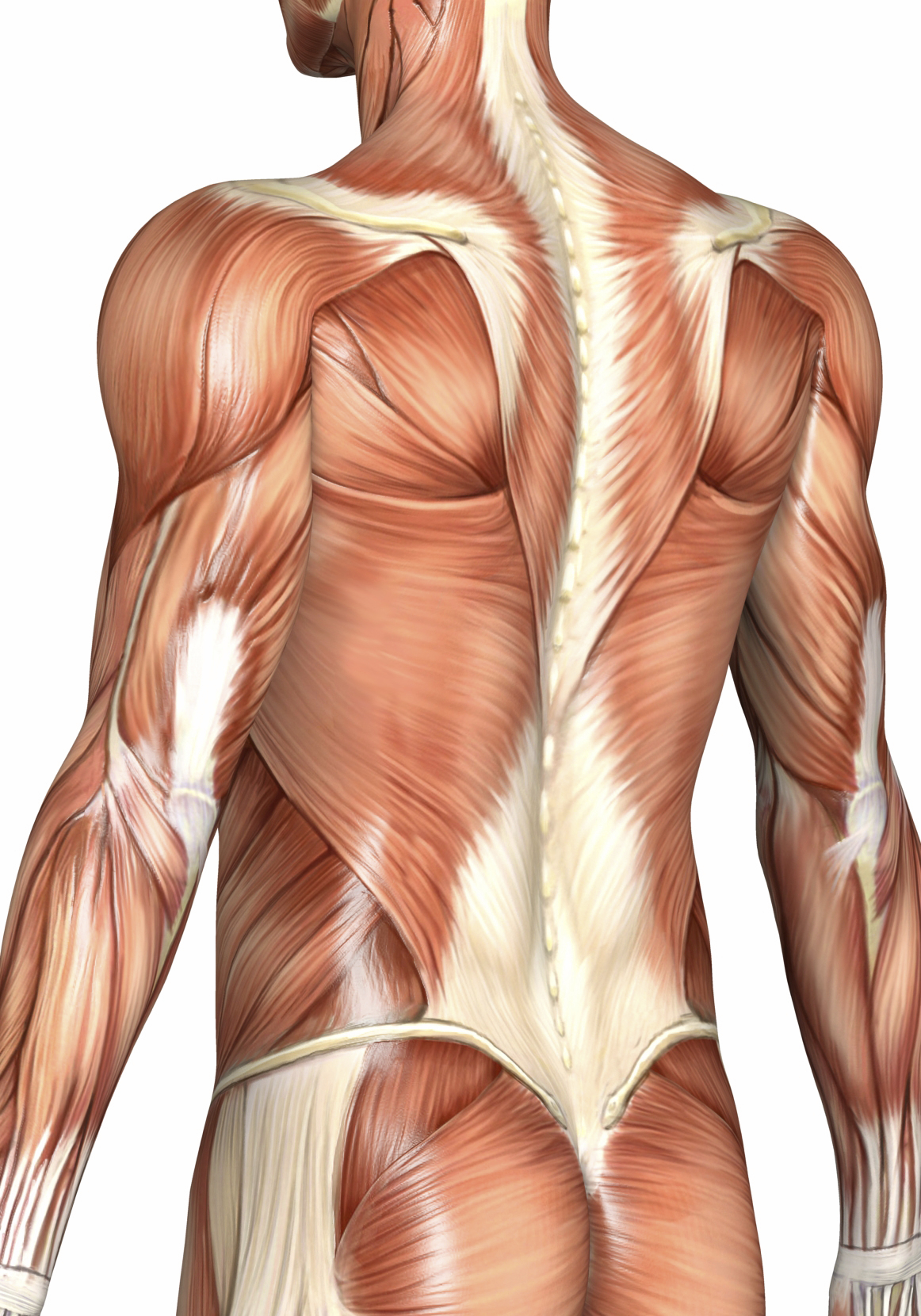 Rolfing Structural Integration Bodywork Santa Monica CA